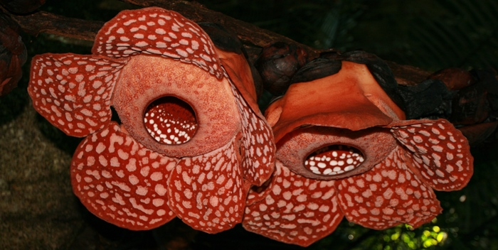 4 X 4 >> GeckoAdventure Flora and Fauna